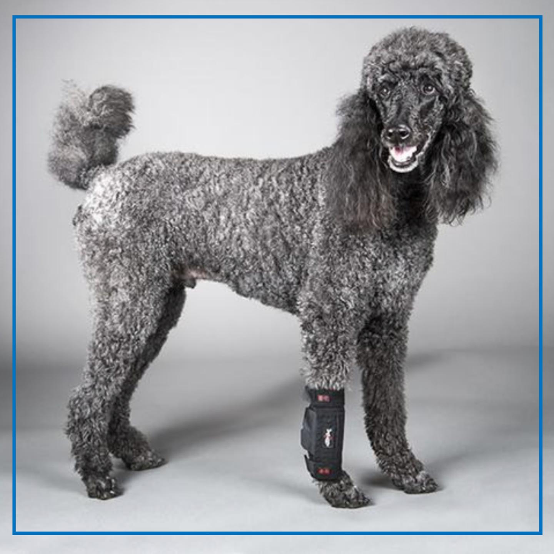 DogLeggs Front Leg Wrap