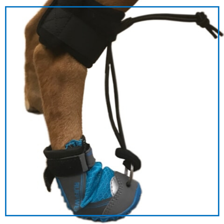 Orthopets (Toe Up)