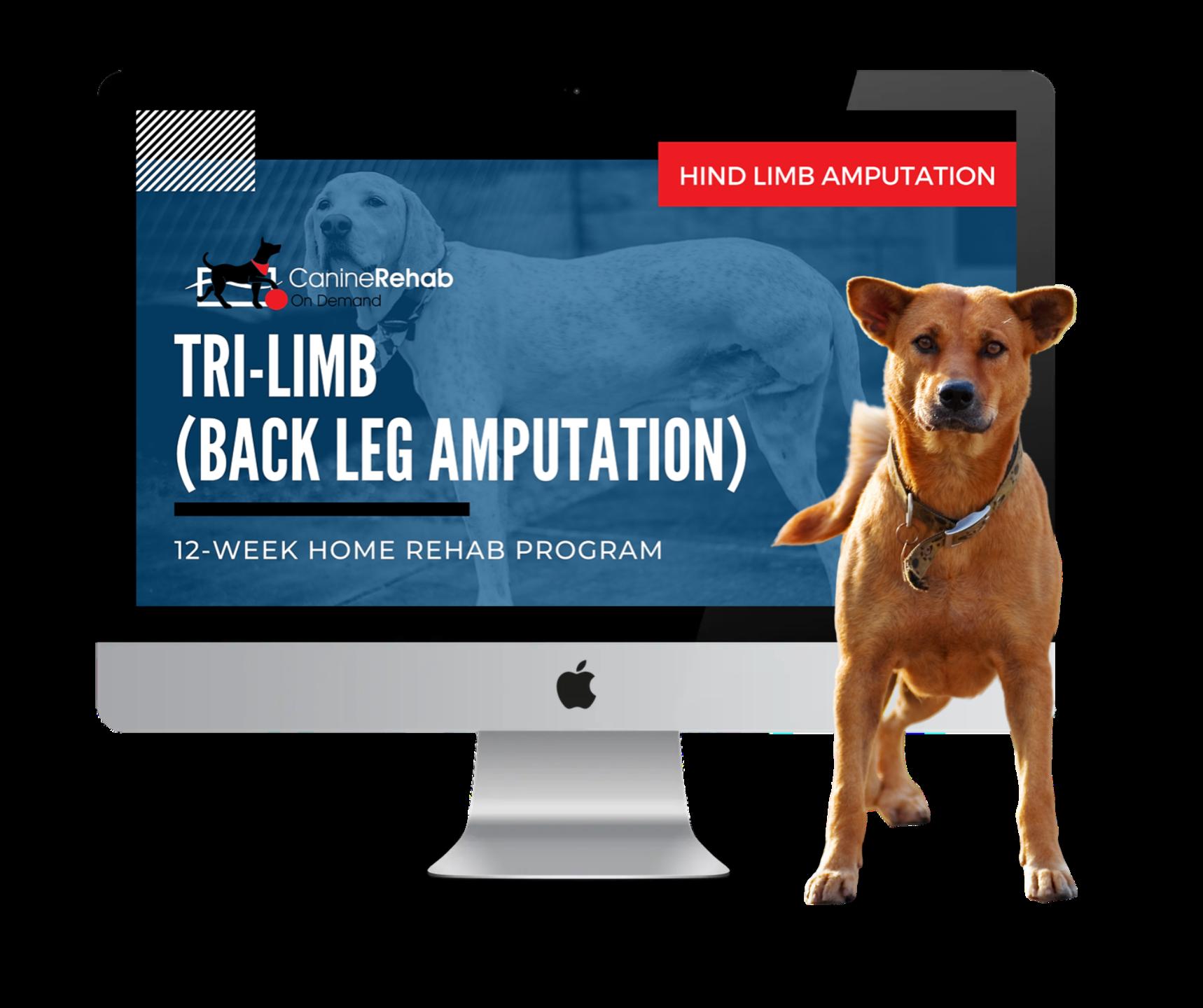 Back Leg Amputation 12-Week Home Rehab Program