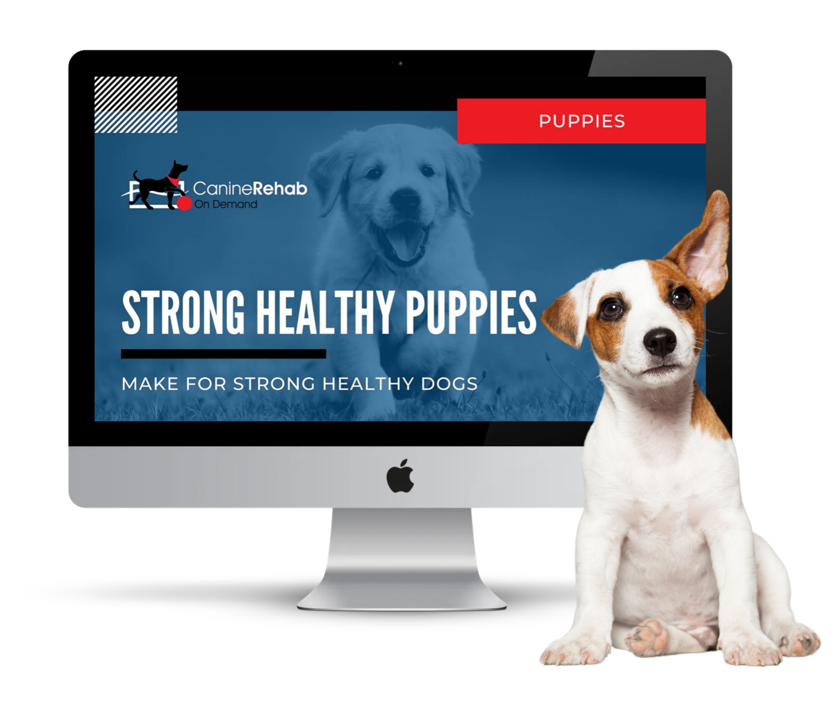 Strong Healthy Puppies