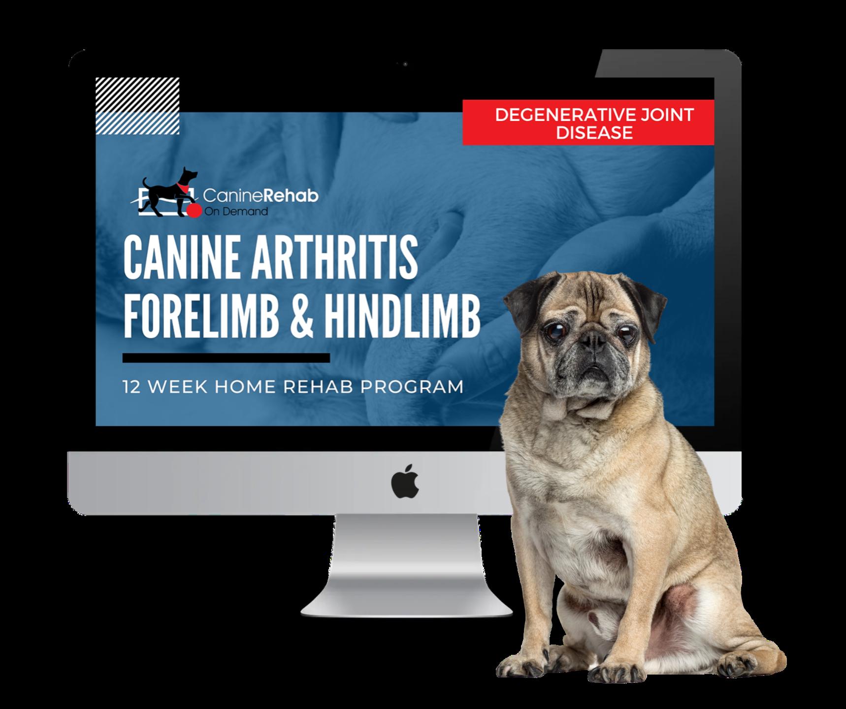 Canine Arthritis 12-Week Home Rehab Program