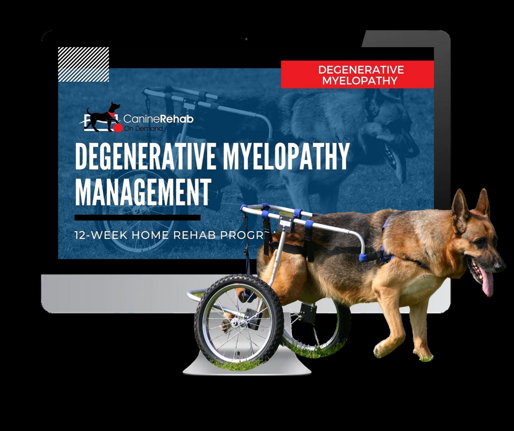 Degenerative Myelopathy 12-Week Home Rehab Program