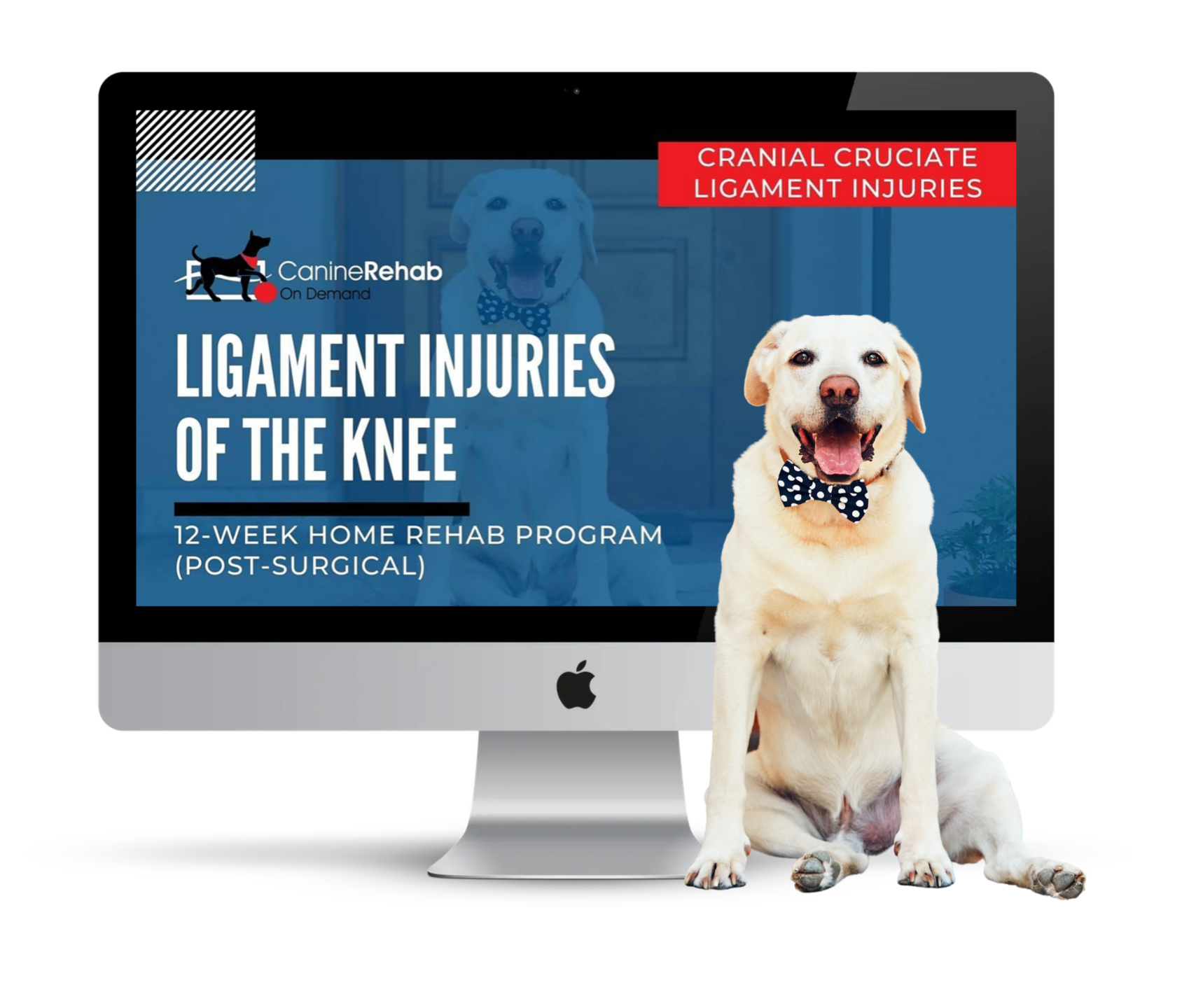Ligament Injuries of the Knee 12-Week Home Rehab Program