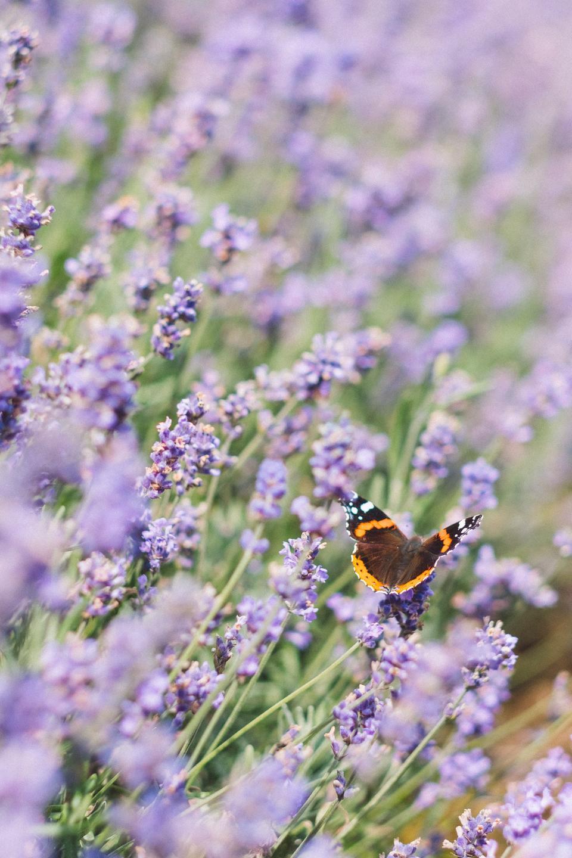 photo of purple flowers in a field