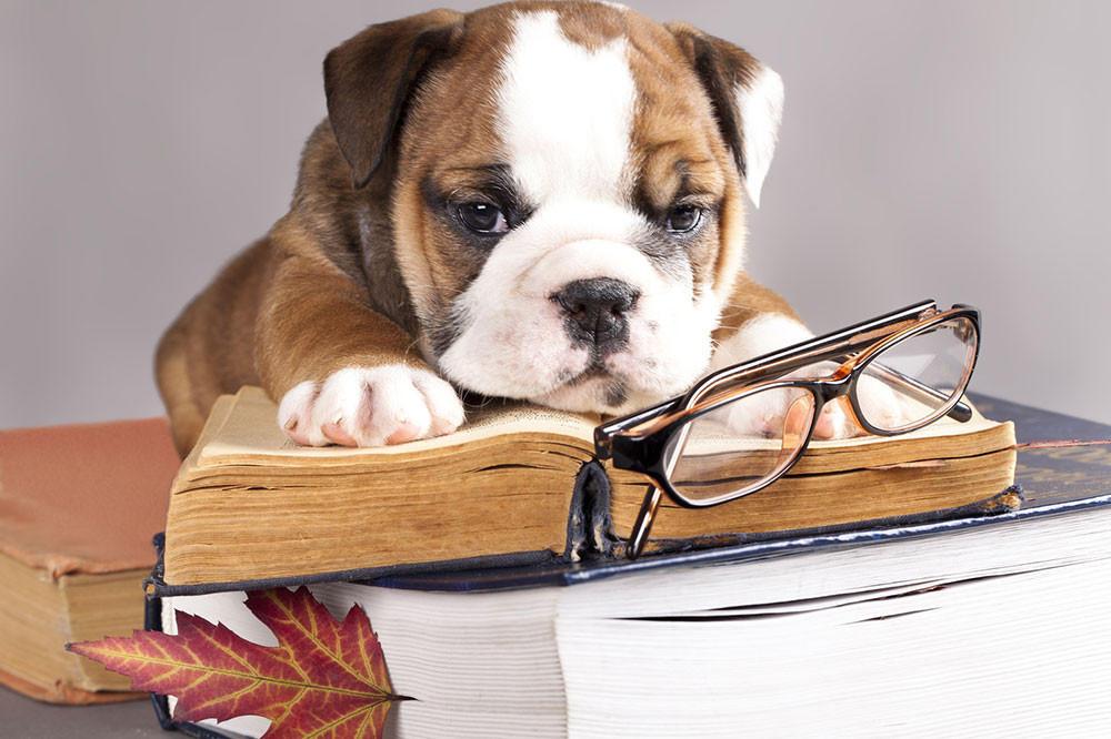 Educazione Cuccioli