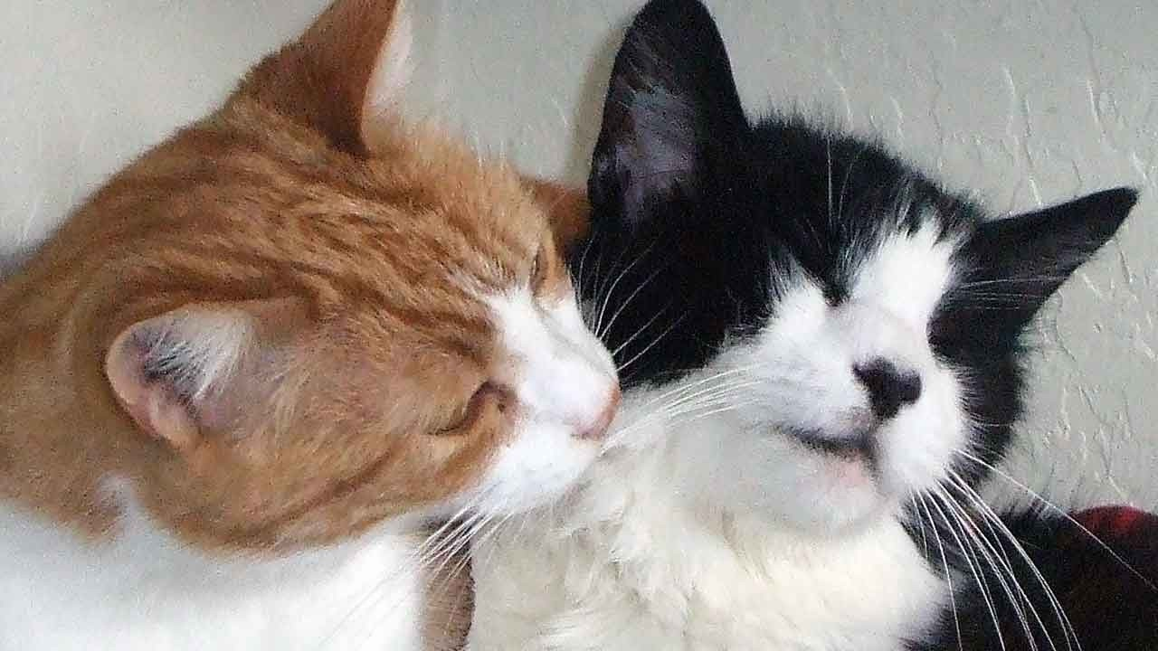 Animal Hospice Group - Chester and Johnnie