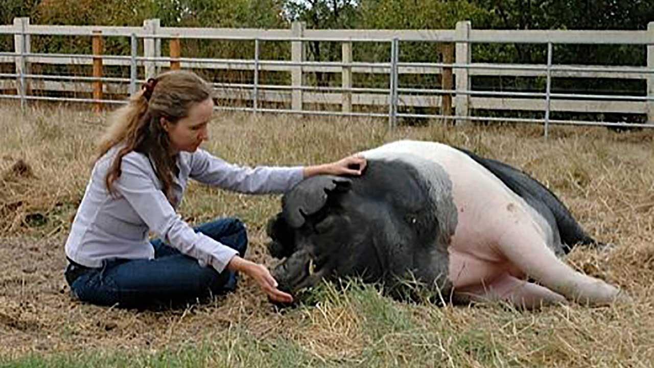 Animal Hospice Group - Caretaker petting pig