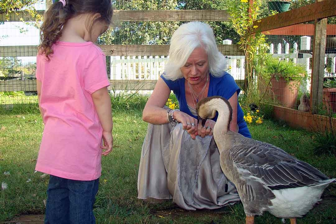 Animal Hospice Group - Gail feeding Odette the Goose