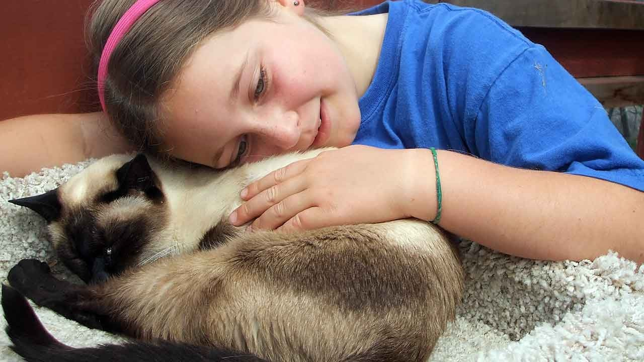Animal Hospice Group - Cat with Sophie