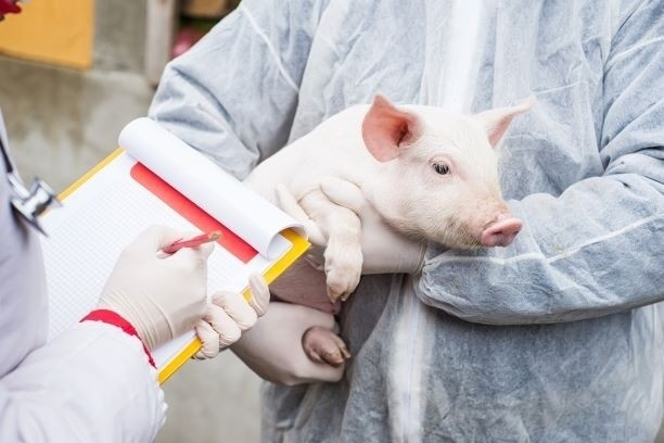 Apiam Animal Health (ASX:AHX)