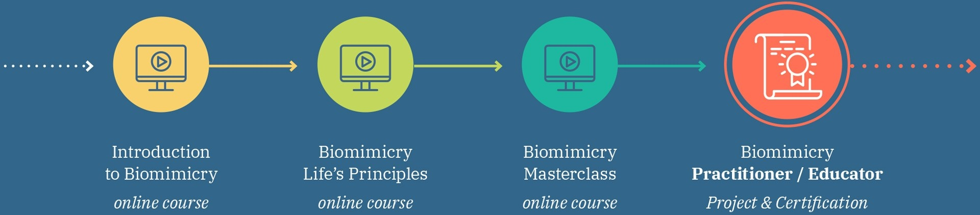 pathway of all biomimicry courses and the biomimicry learning journey