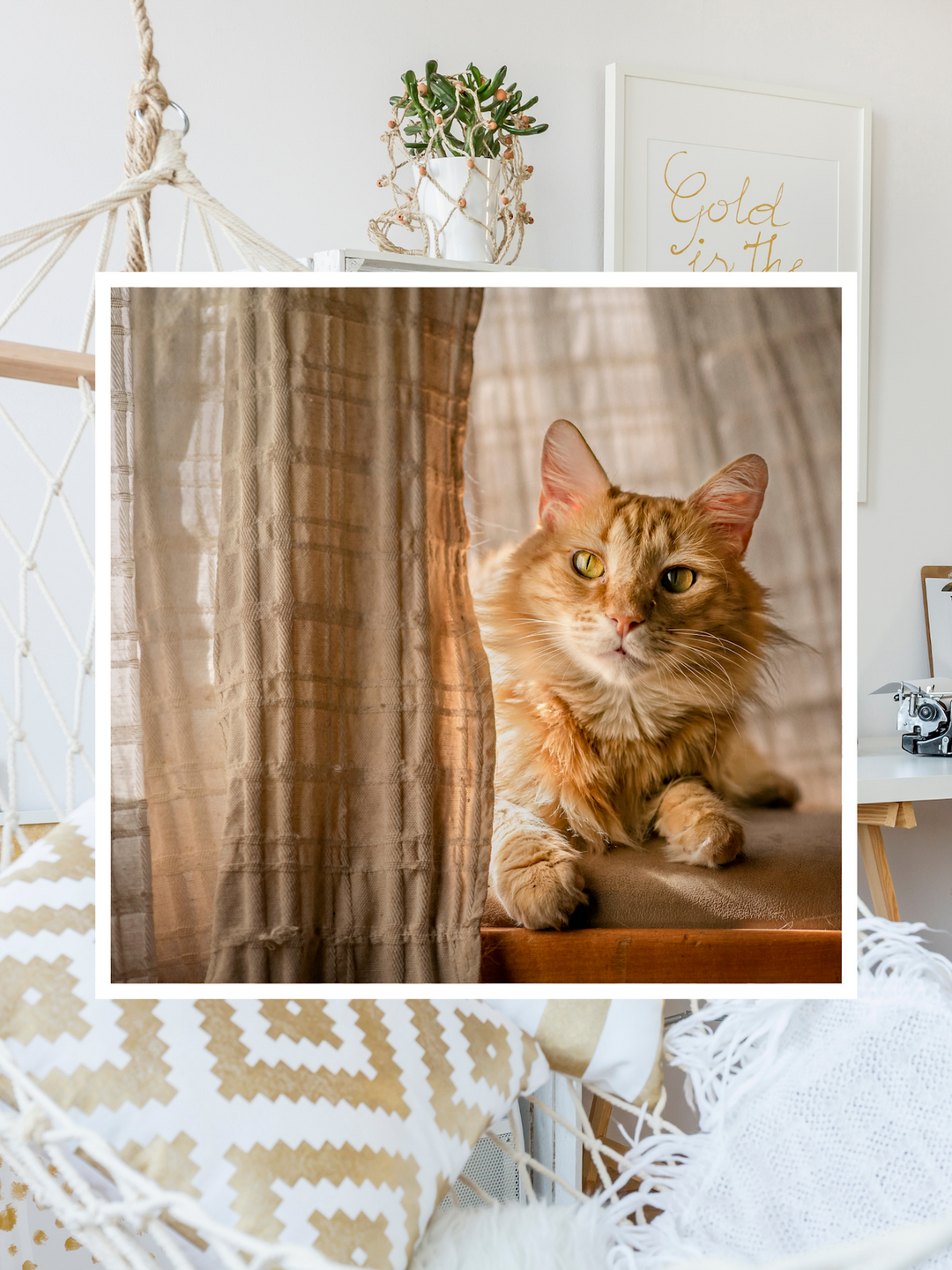 orange cat behind taupe colored drapery