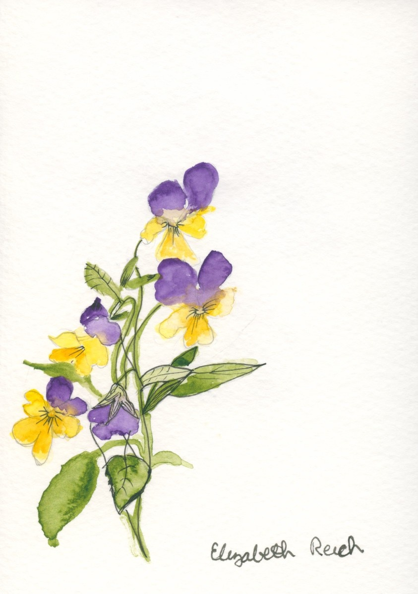Feature Artist Elizabeth Reich watercolor artist