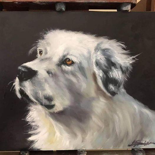 pet-portrait-Samoyed