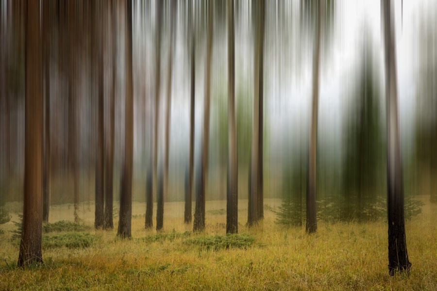 A photograph of trees in a forest using panning or intentional camera movement (ICM)