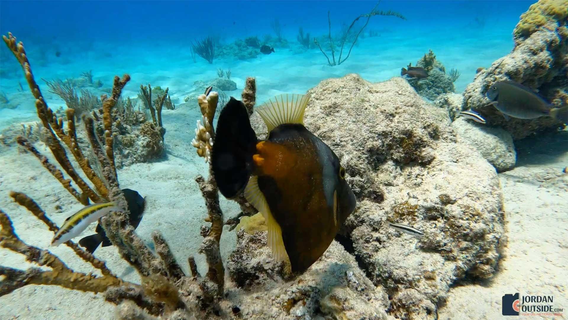 Fish at Cane Bay, St. Croix