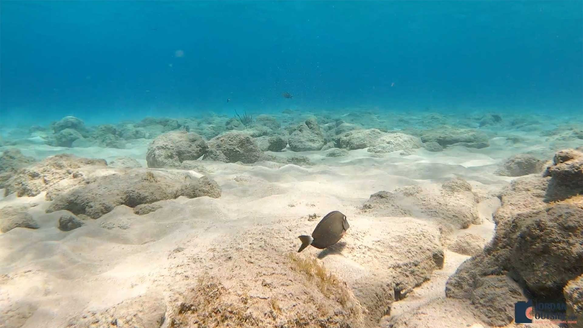Fish in the sea at Cane Bay, St. Croix