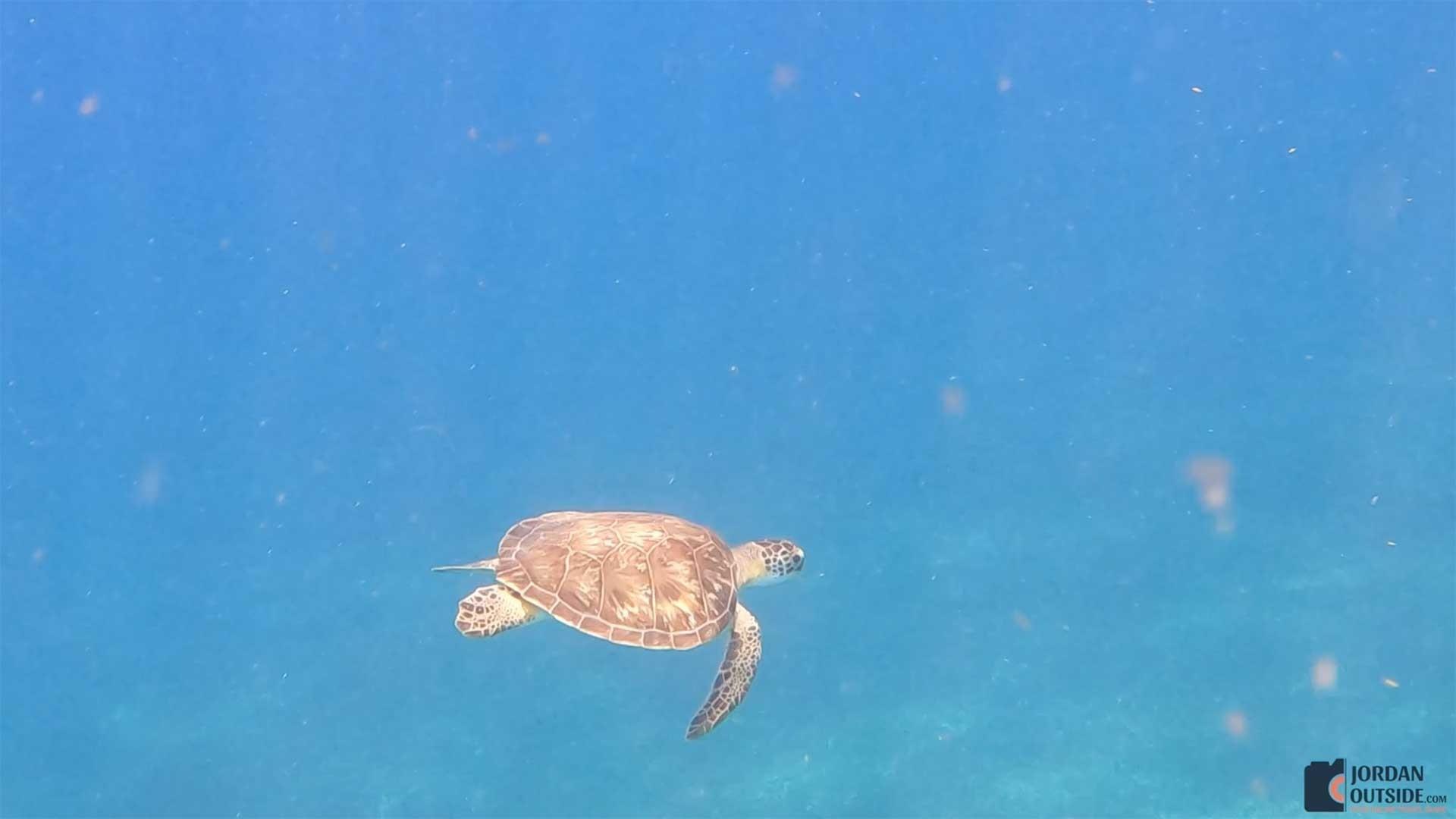 A Turtle at Butler Bay Beach