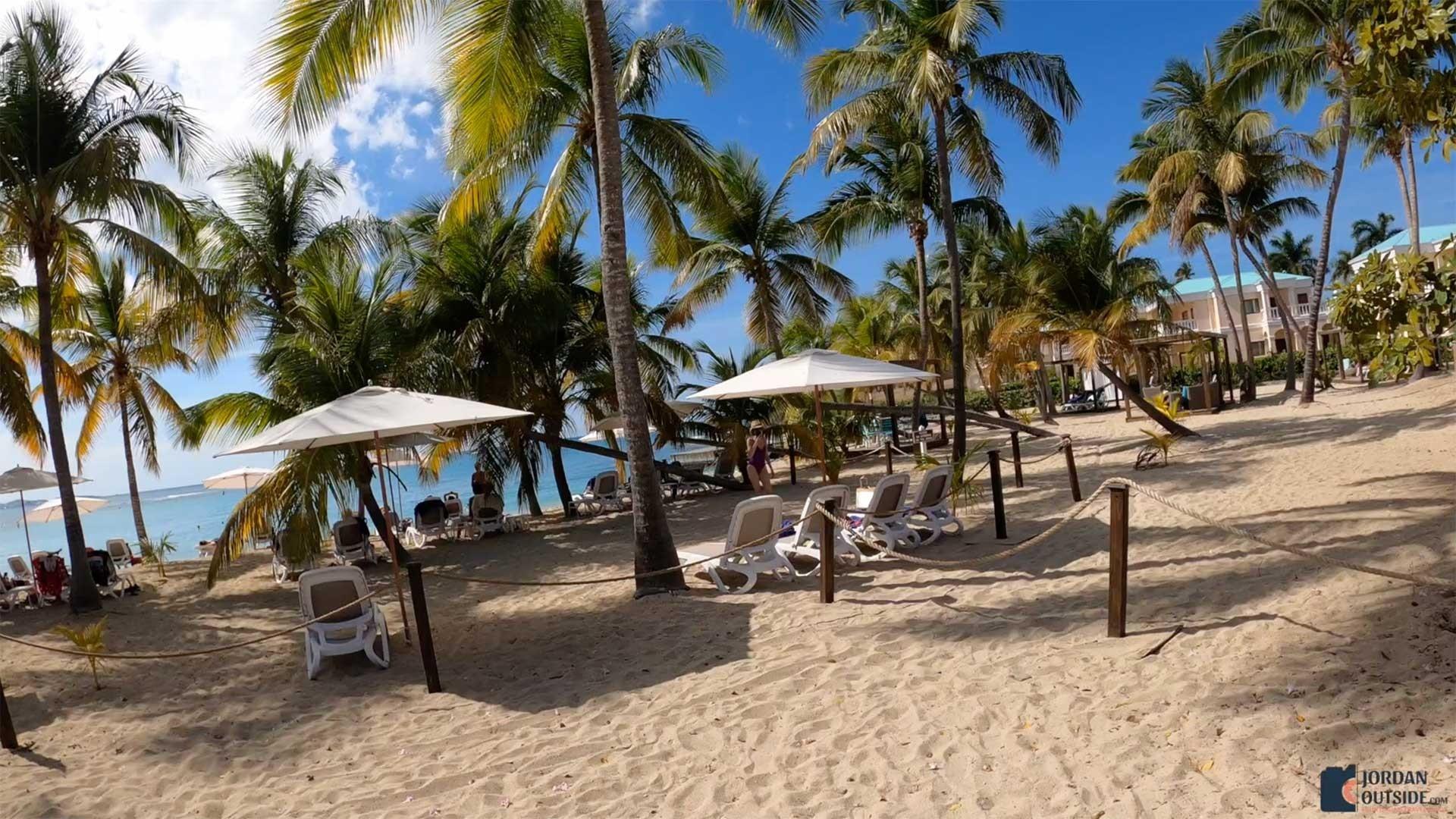 Palm Trees at Mermaid Beach