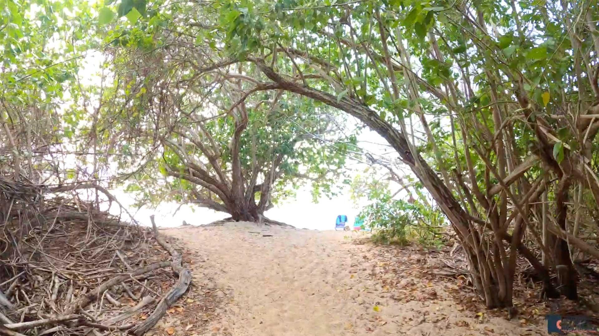 Shoys Beach Tree Canopy exit, St. Croix