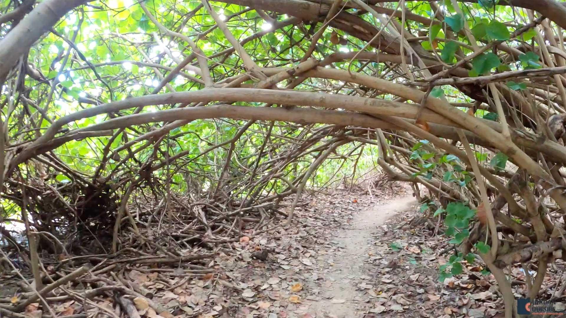 Shoys Beach Tree Canopy, St. Croix