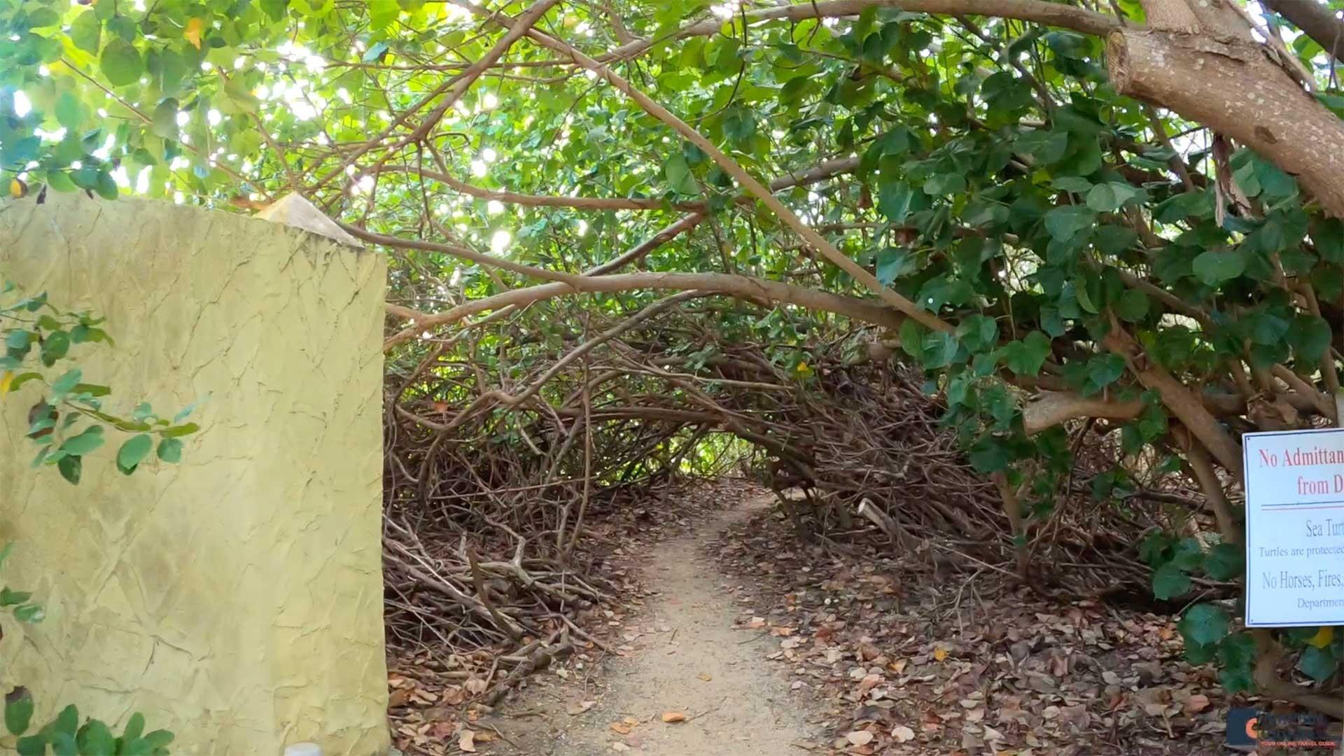 Shoys Beach Path, St. Croix