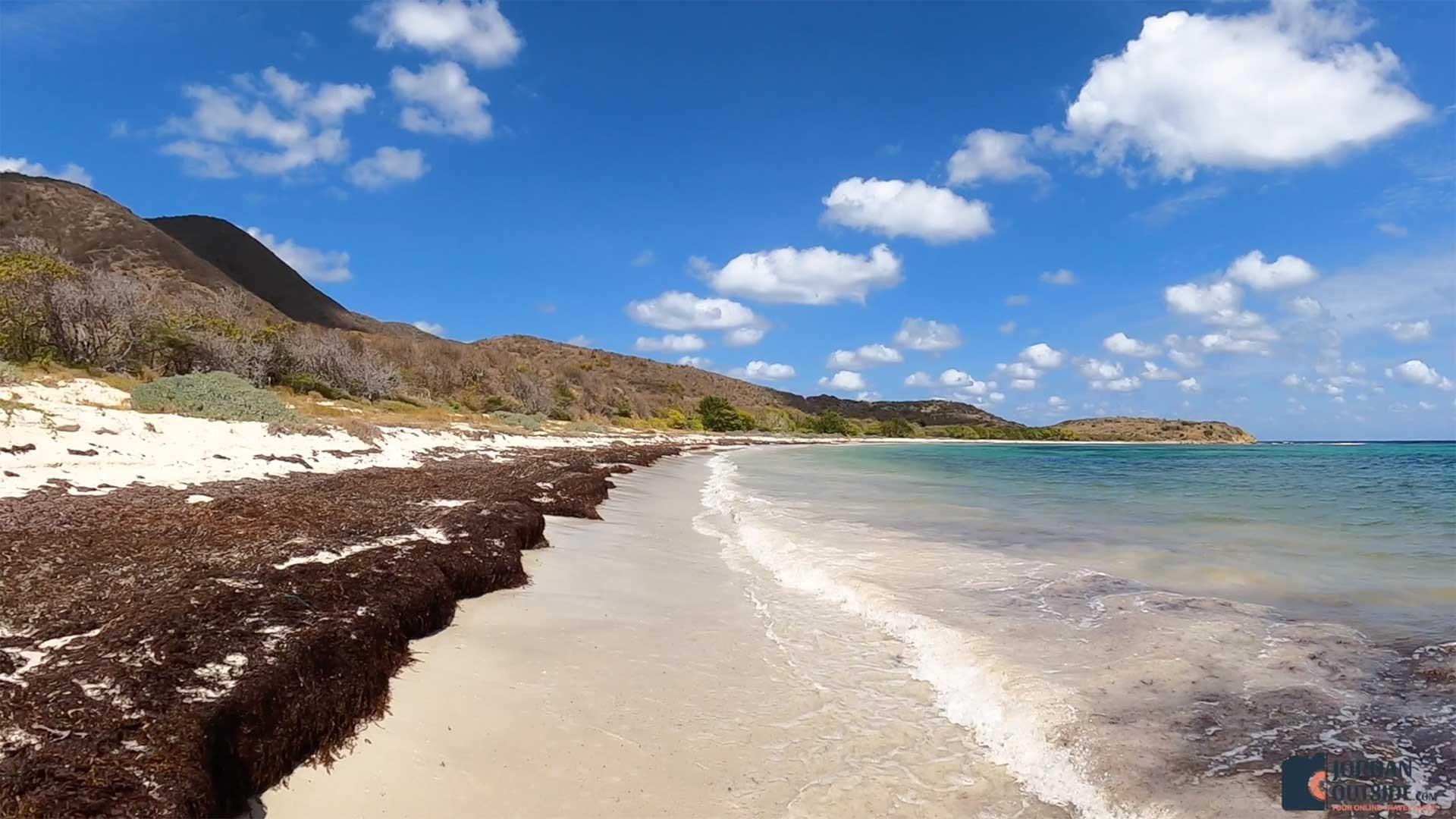 Seaweed at Jack's Bay Beach, St. Croix