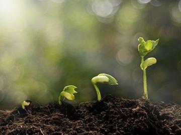 seedling growing in dirt