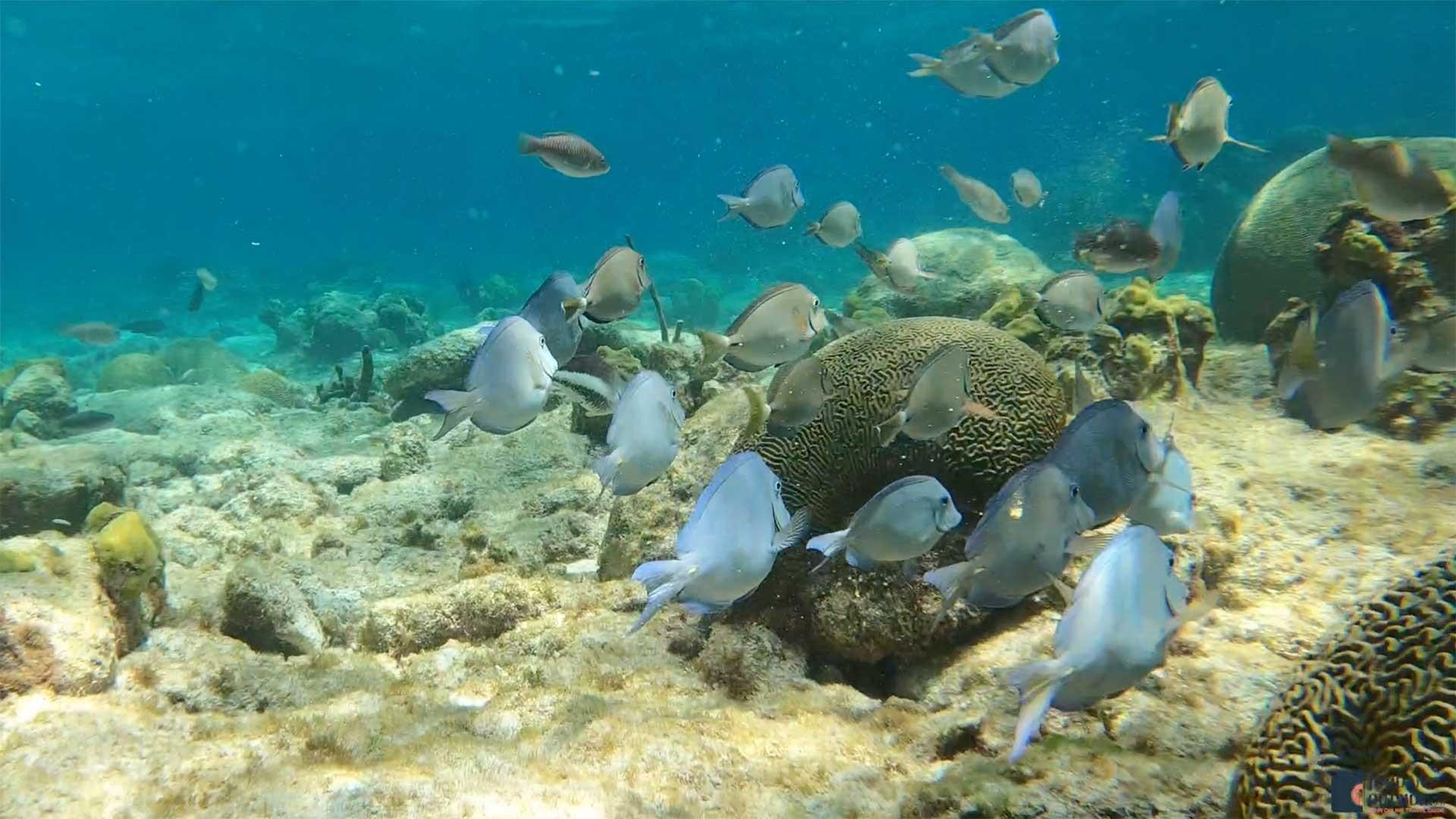 Fish at Buck Island Reef, St. Croix
