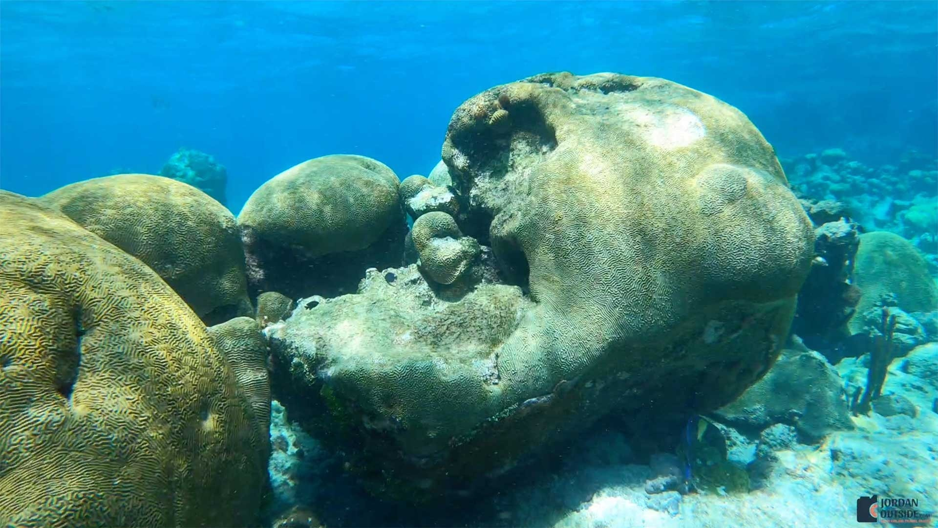 Brain Coral at Buck Island Reef, St. Croix
