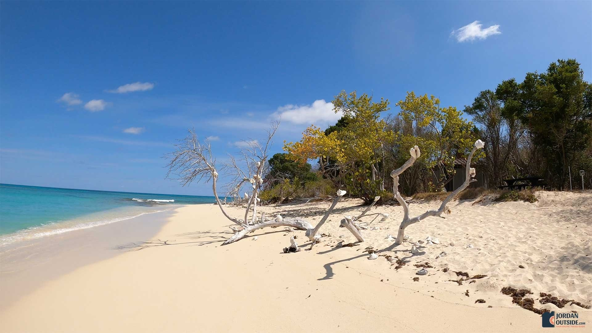 Sea Shell Tree at Turtle Beach, St. Croix