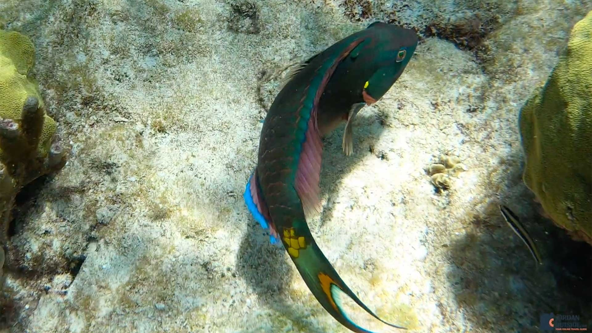 Colorful fish at Buck Island Reef, St. Croix