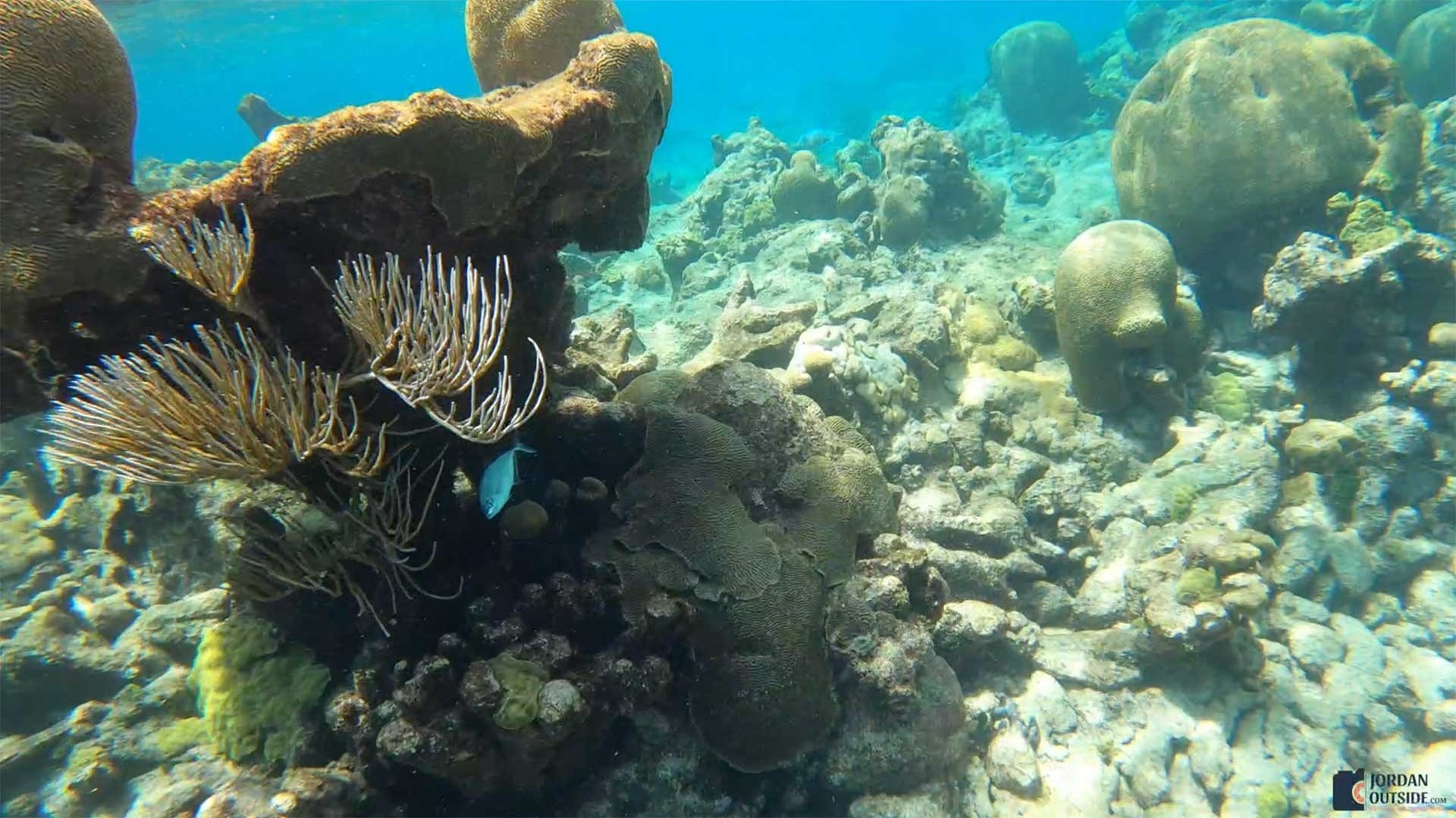 Coral Reef at Buck Island, St. Croix