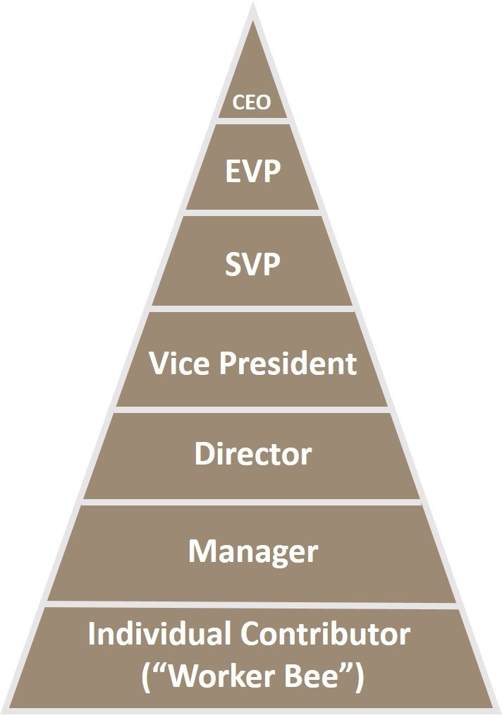 Asian American corporate pyramid worker bee individual contributor leadership management
