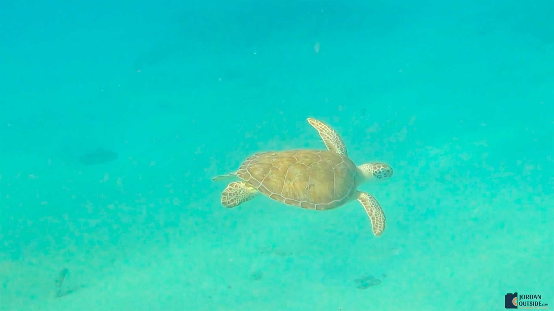 Sea Turtle at Frederiksted Pier in St. Croix