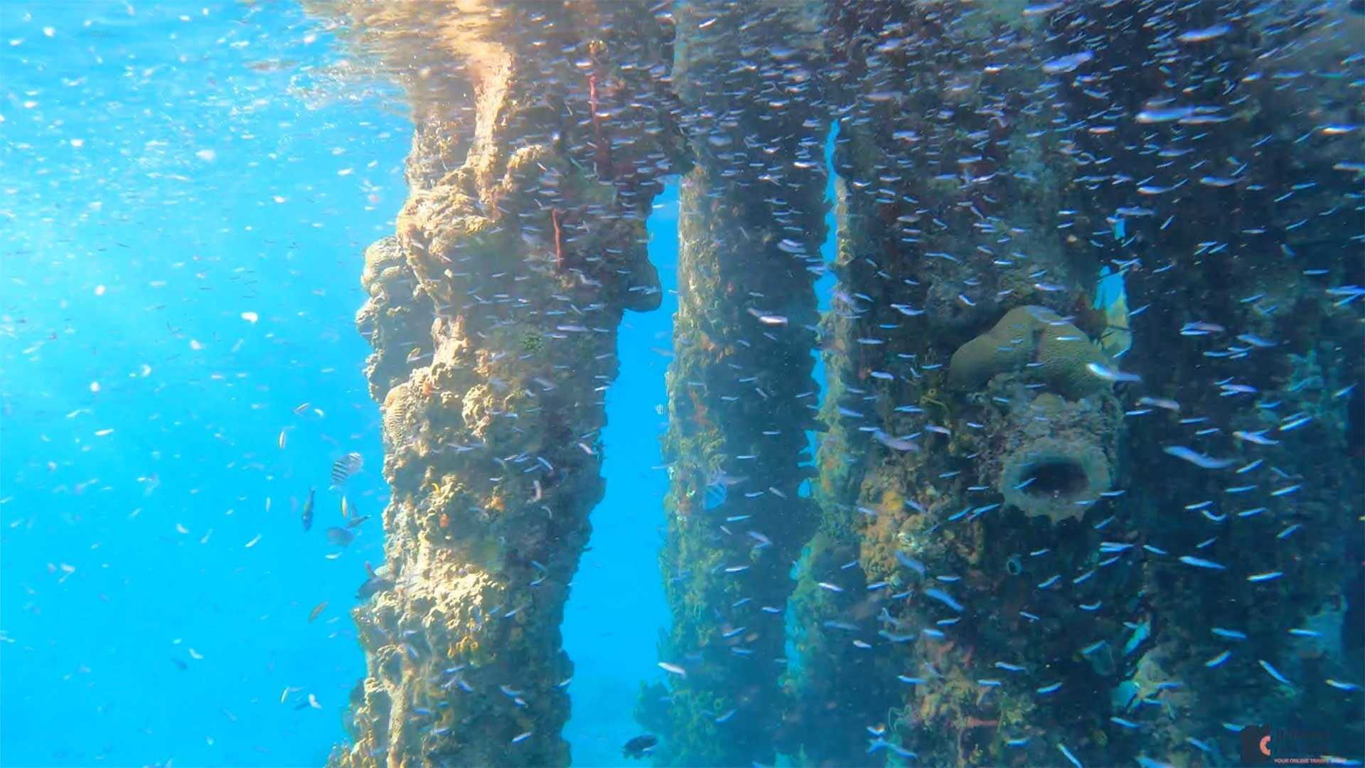 Underwater view of the Frederiksted Pier in St. Croix