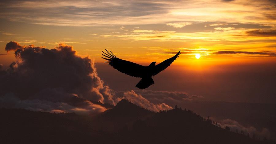 Email, eagle, flying