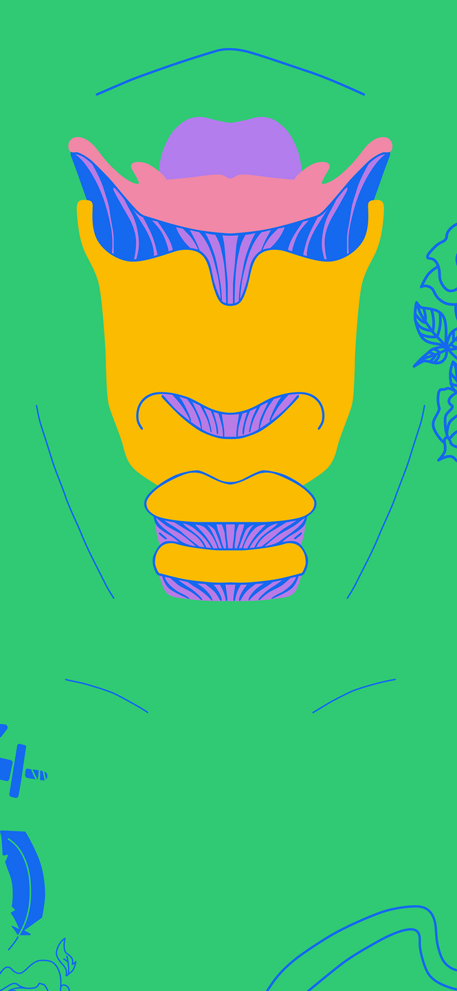 phone wallpaper of an illustration of the cartilage of the larynx