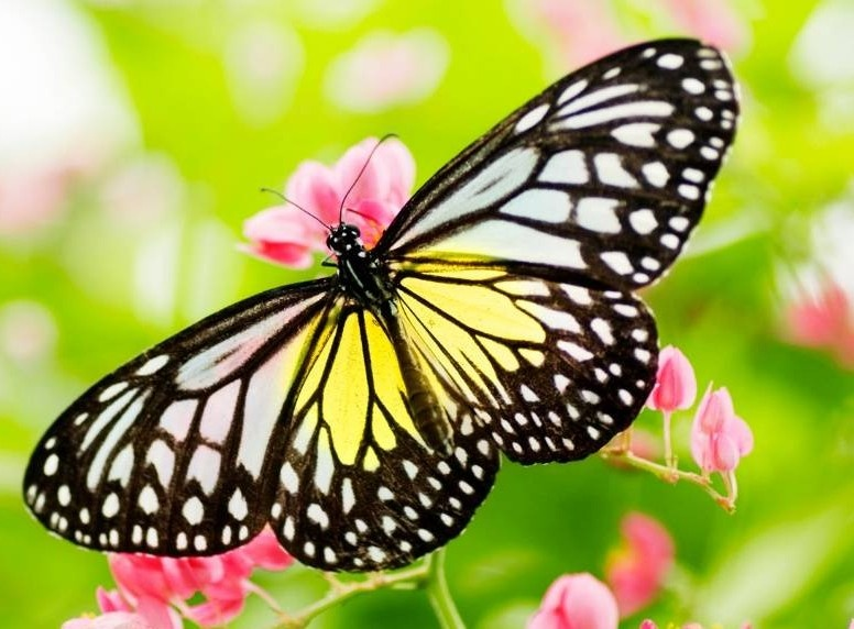Butterfly transform your life free facebook group community