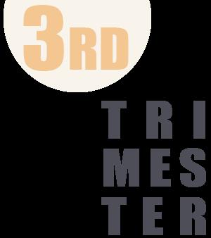 first trimester