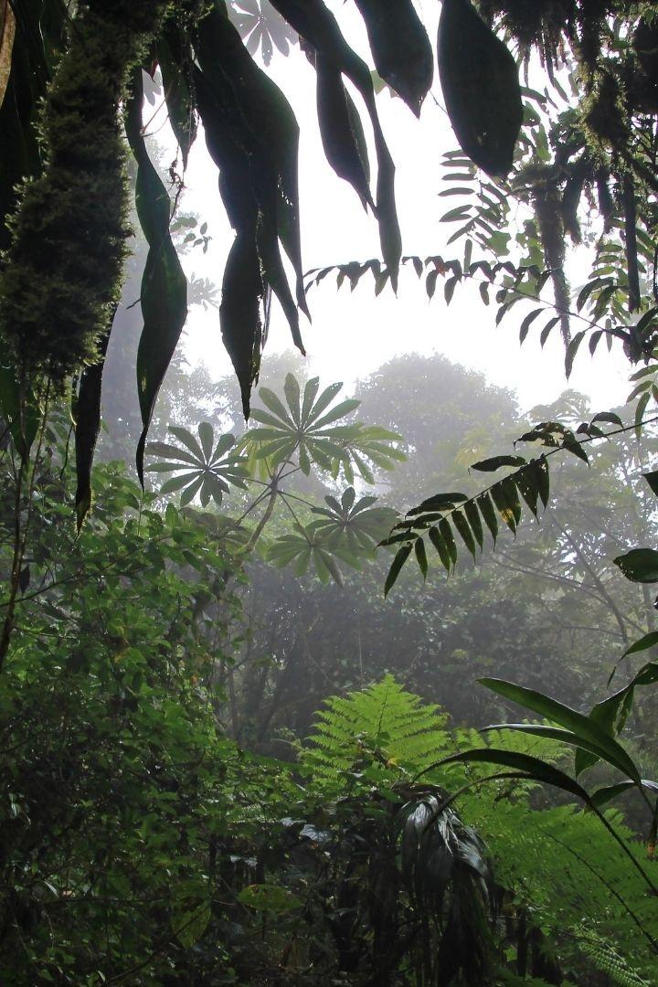 Rain forests of Monteverde, Costa Rica