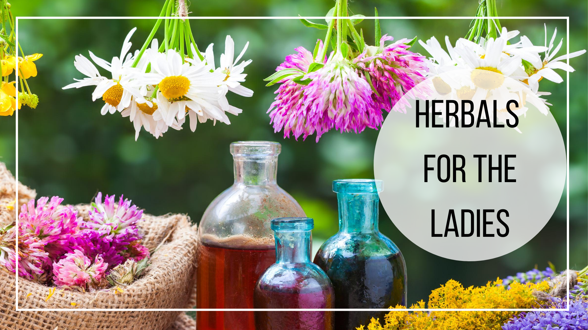 plant medicine for womens health