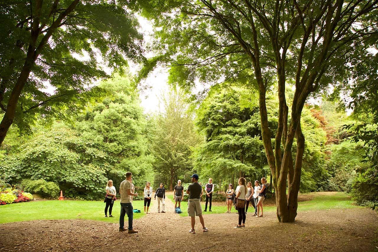 Forest Meditation Circle