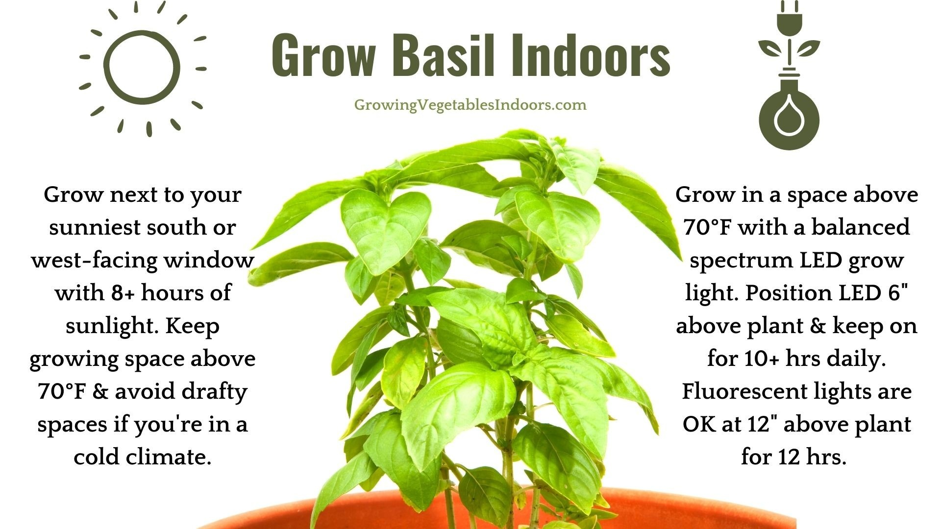 How to Grow Basil Indoors with a Window or Grow Light