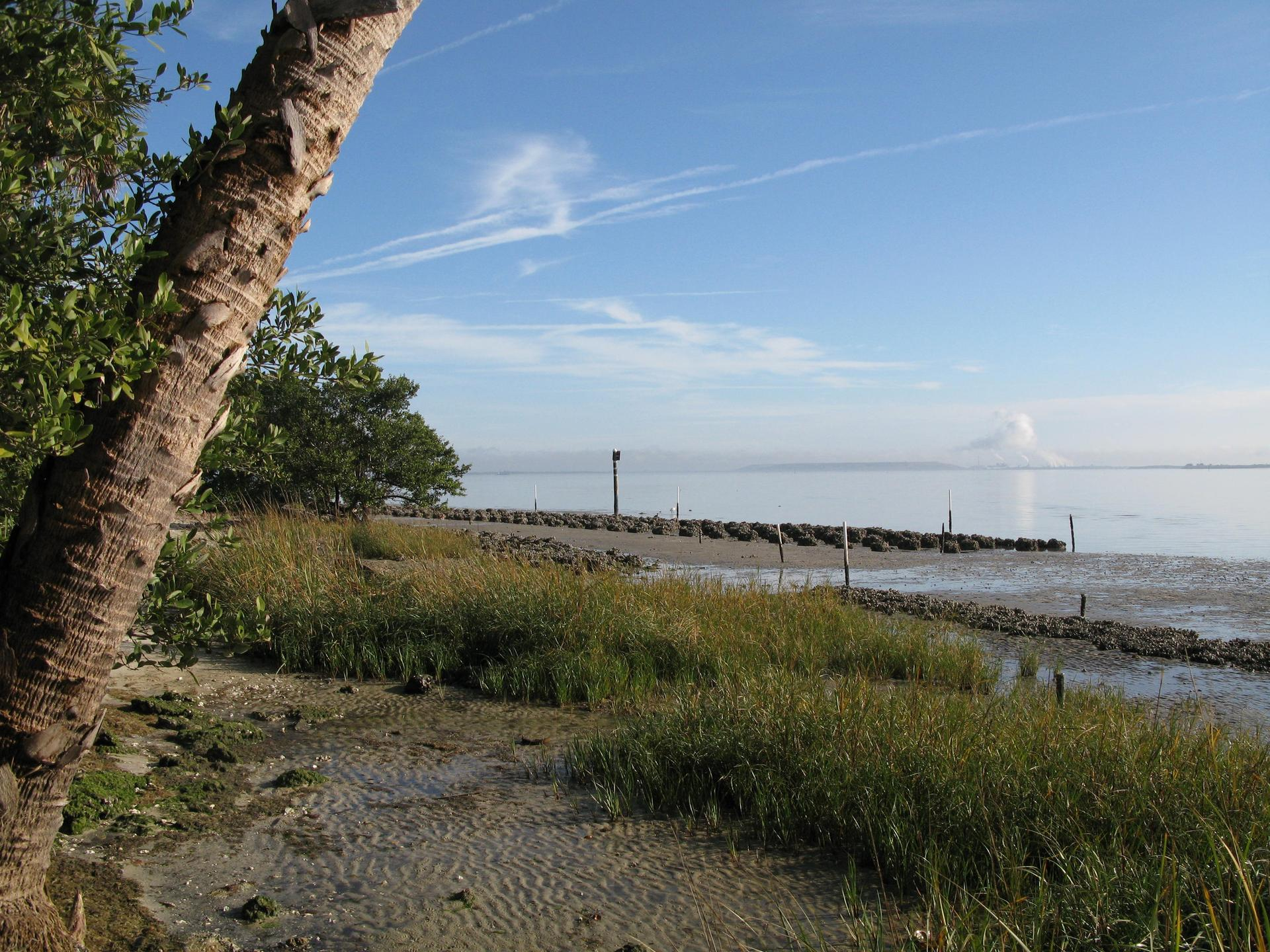 Marsh and oyster reef habitat restoration MacDill AFB, Tampa, Florida