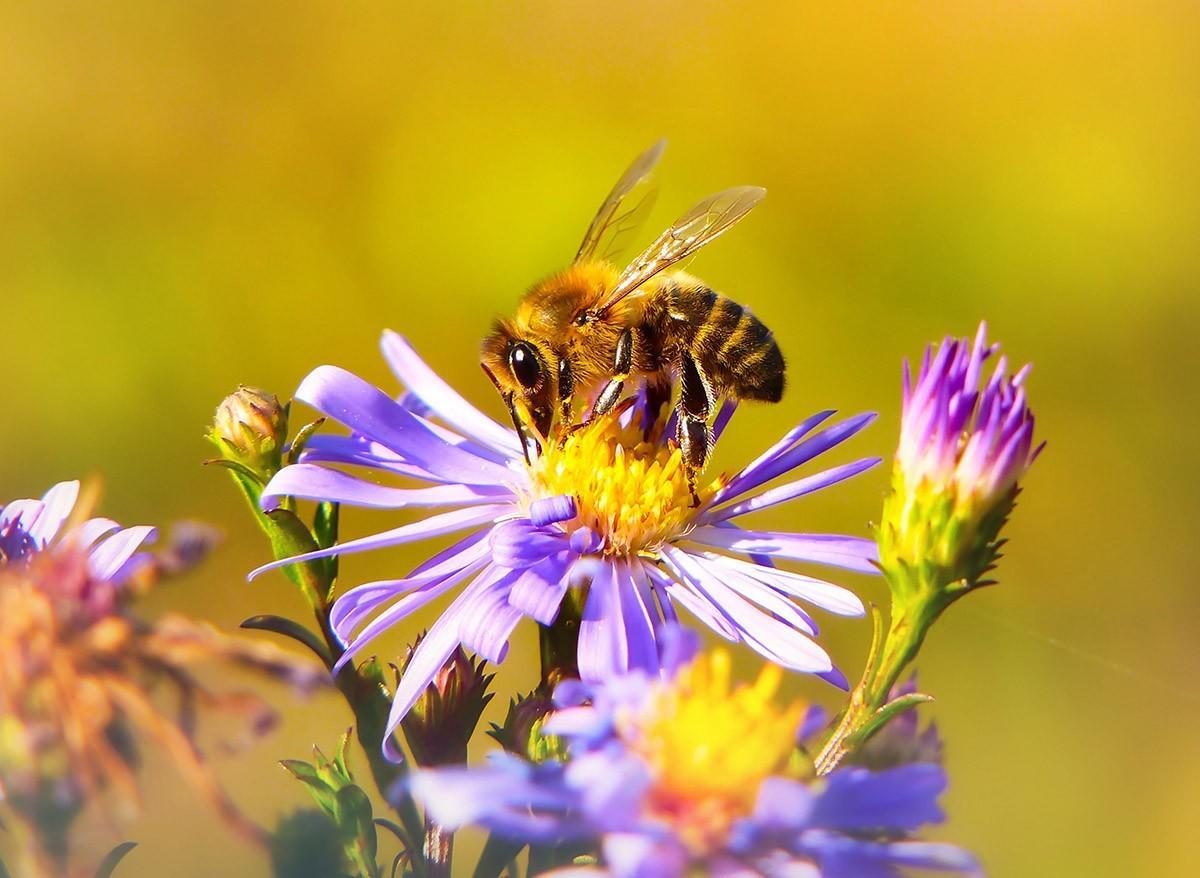 worker bee on flower