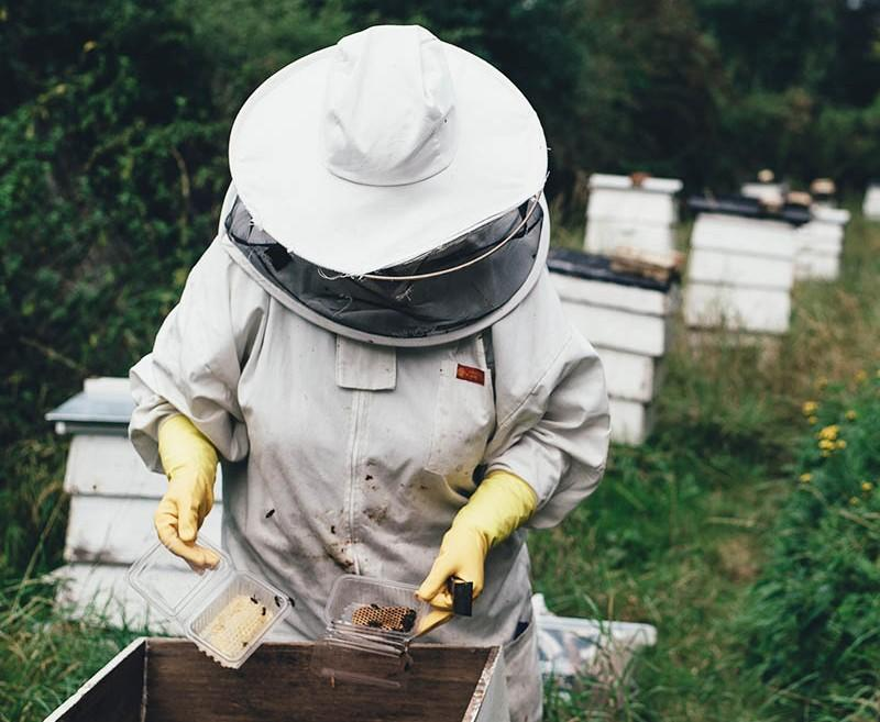 beekeeper treating a beehive online class