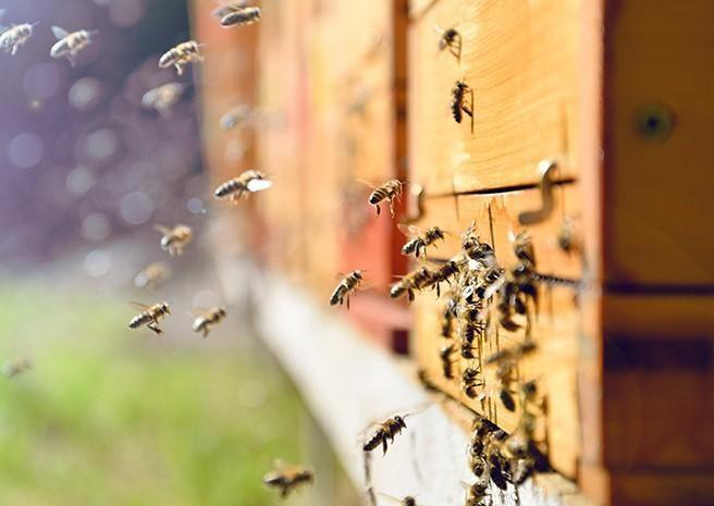 honey bees going into a beehive