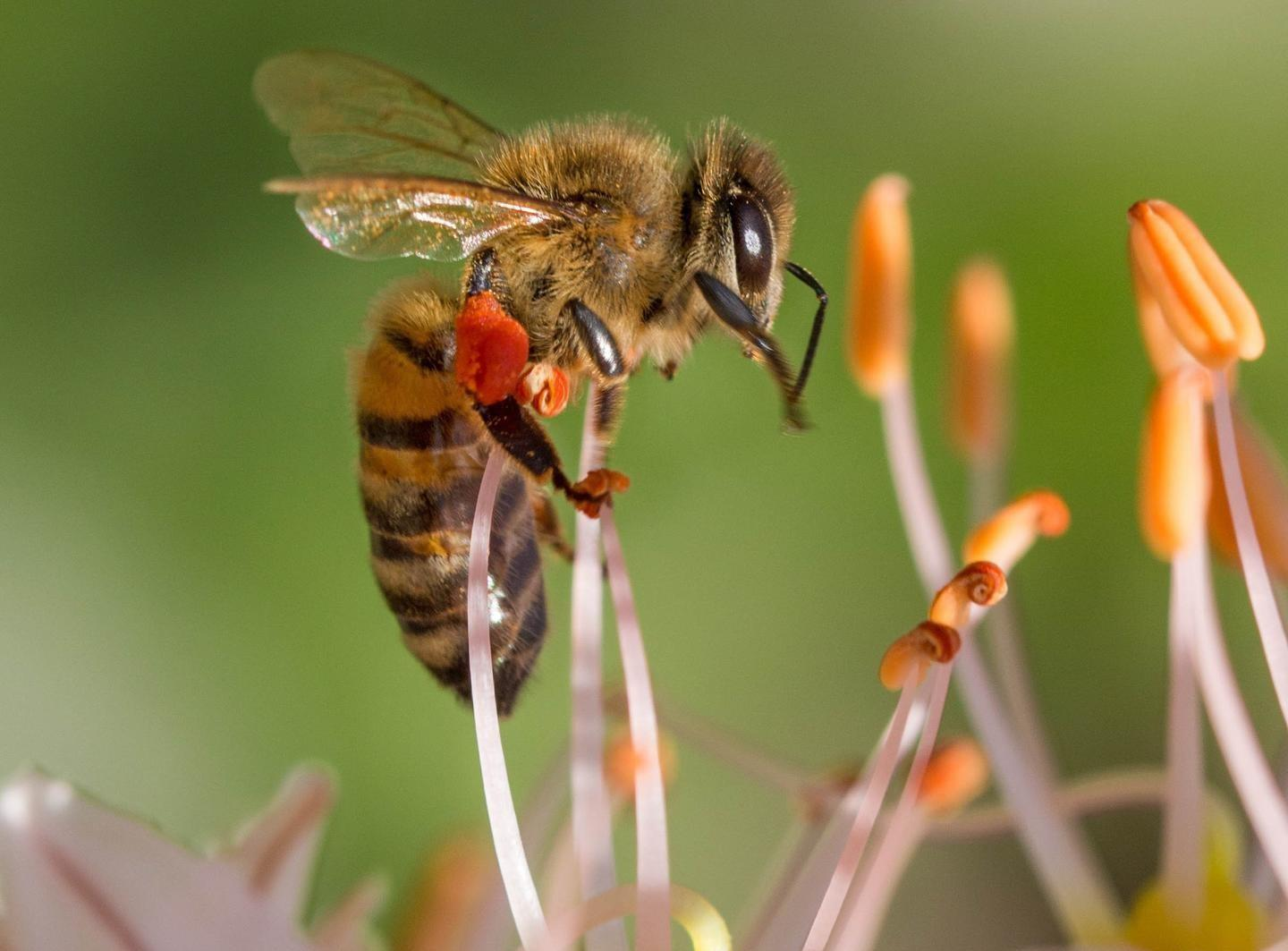 worker bees on a flower
