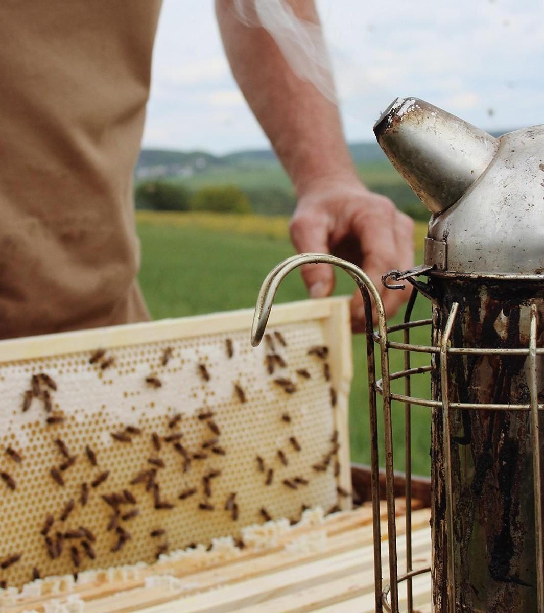 bees keeping with honey